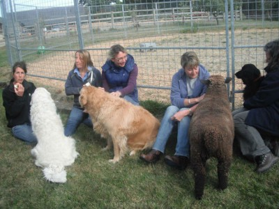 Attendees interacting with the animals