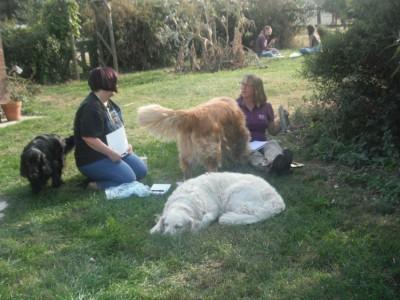 Students on Animal communication workshop