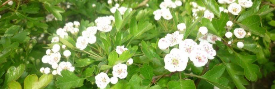 Slider – Flowers
