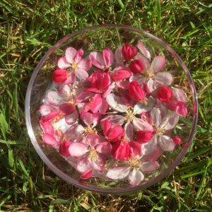 Flower and Vibrational Essences