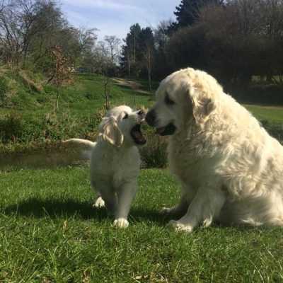 Positive Experiences For Puppies